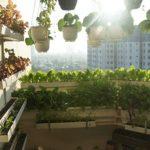 Mách bạn bí quyết trồng rau hiệu quả ở ban công chung cư